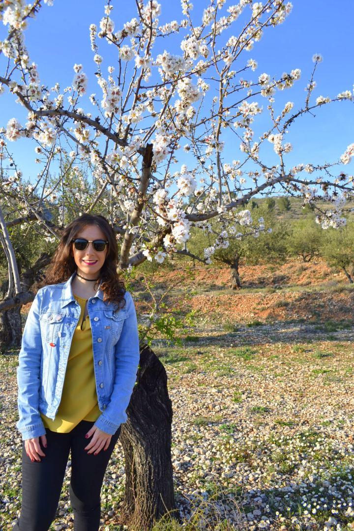 primavera 12